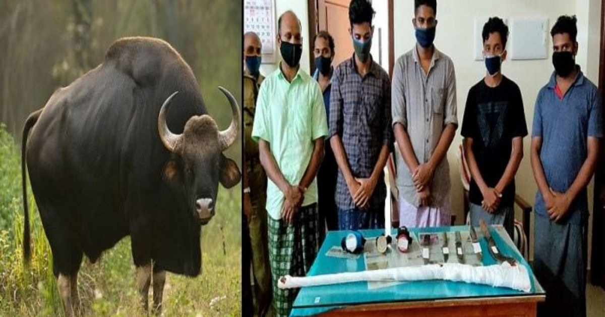 keral-some-people-murder-pregnent-oxen